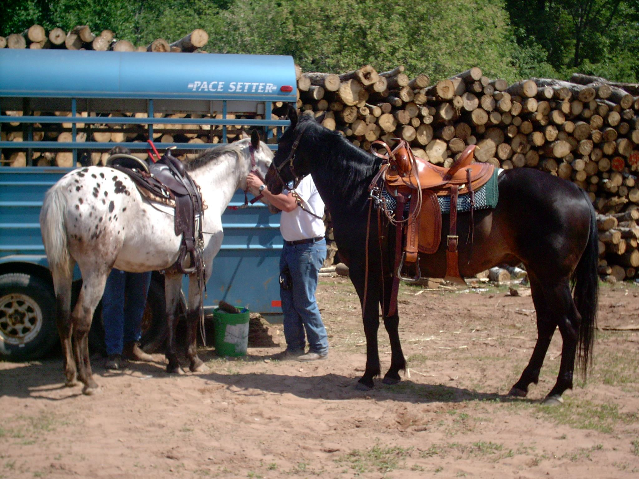 Two men with horses beside horse trailer